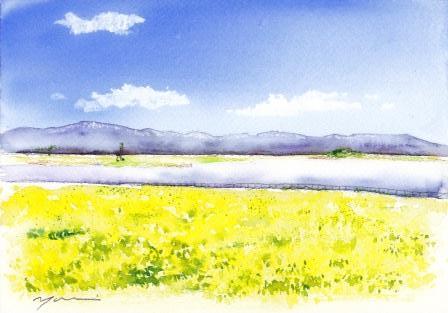 3月の水彩色えんぴつ教室 菜の花