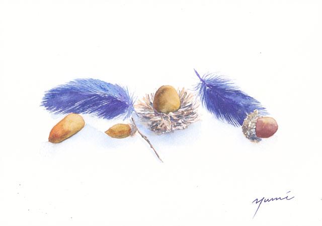 10月水彩色えんぴつ教室 団栗と羽根