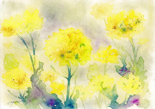 4月水彩色えんぴつ教室 菜の花