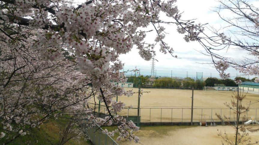 産経学園 透明水彩 4月桜の降る道