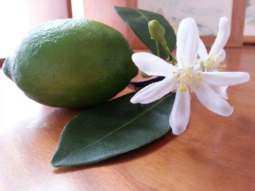 6月の水彩色えんぴつ モチーフ green lemon